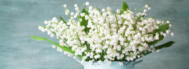 piante e fiori tararà vendita